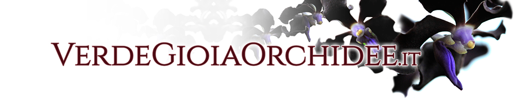 logo_verdegioia